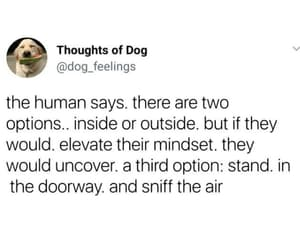 elevate, inside, and thoughts of a dog image