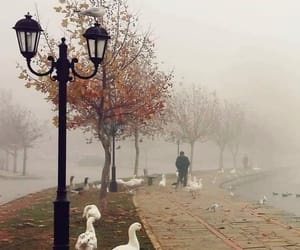 invierno, photography, and neblina image