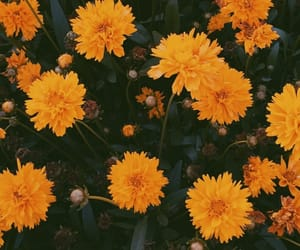 flowers, grunge, and yellow image