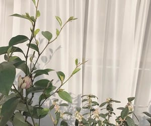 aesthetic, plants, and white image
