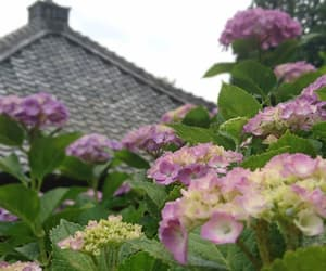 green, tiles, and hydrangea image