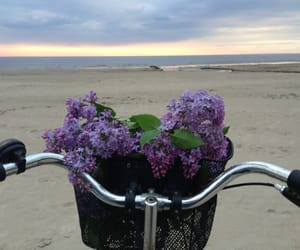 flowers, beach, and bike image