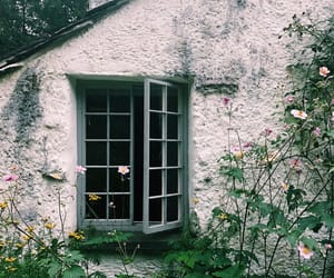 beauty, cottage, and dove image