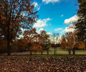 autumn, november, and 2018 image