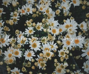 flowers, howlong, and howlongwilliloveyou image
