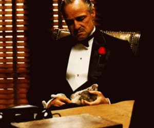 art, cat, and The Godfather image