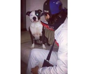 chien, mec de tess, and YAMAHA image