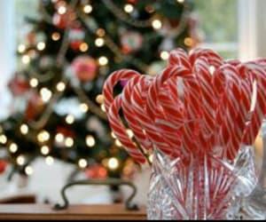 christmas, trees, and lights image