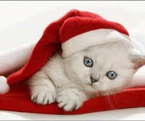 cat, santa claus, and christmas image