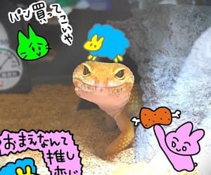 asia, gecko, and japan image