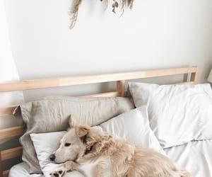 animal, dog, and interior image
