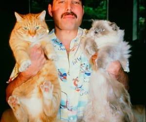cats, Freddie Mercury, and legend image