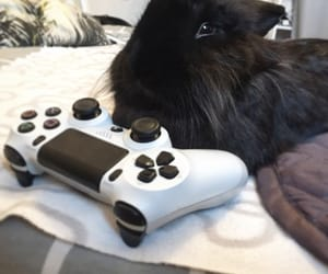 bunny, gamer, and lapin image