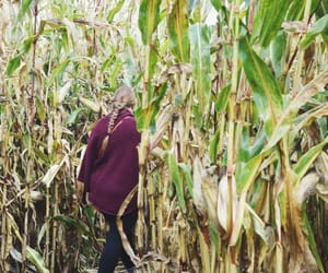 autumn, corn maze, and apple picking image