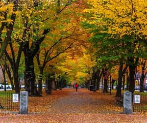 autumn colors, benches, and boston image