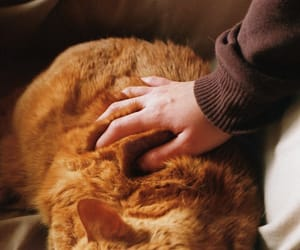 cat, hand, and photography image