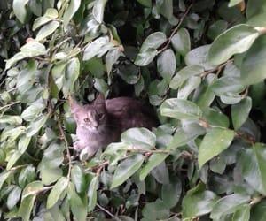 cat, ph: mom, and brecaju image