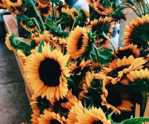 flowers, sunflower, and plants image