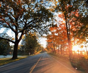 autumn, christmas, and driving image