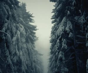 explore, nature, and forrest image