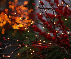 autumn, christmas, and cold image