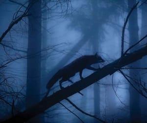 fox, dark, and fog image