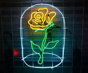aesthetic, rose, and neonlights image