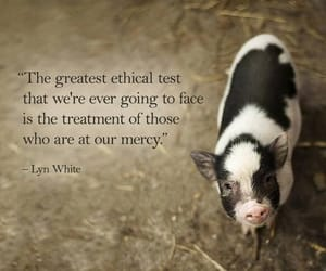 pig, animal, and animal rights image