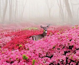 flowers, pink, and deer image