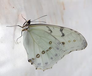 butterfly, nature, and white image