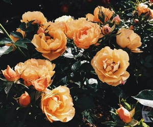 aesthetic, feed, and flowers image