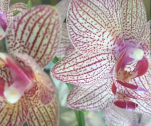 flower, pale yellow, and pink stripes image