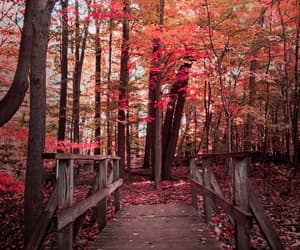 autumn colors, fall, and leaves image