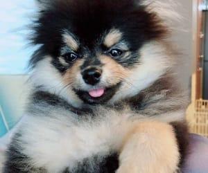 dog, wallpaper, and bts image