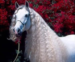 Animales, belleza, and equino image