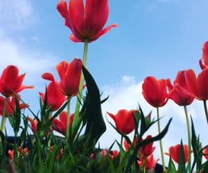 blue skies, flowers, and red image