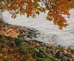 adventure, autumn, and coast image