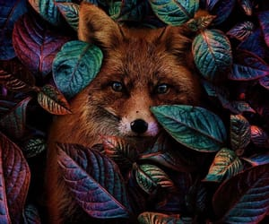 forrest, fox, and cute image
