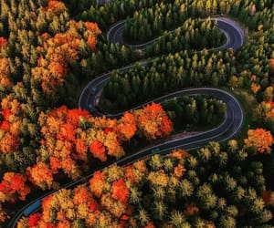 aerial photography, forest, and nature photography image