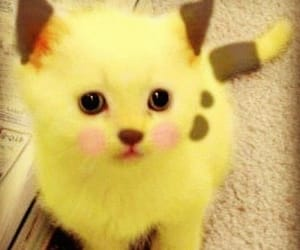 cat, pikachu, and kitten image