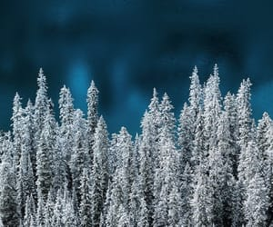 forrest, snow, and nature image