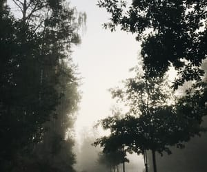 cold, fog, and photo image