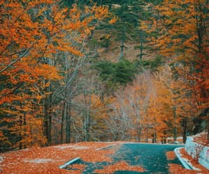 autumn, forrest, and albania image