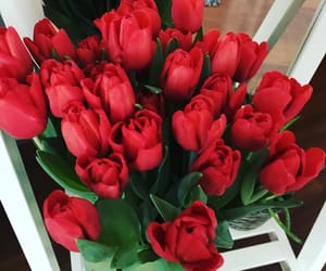 beauty, red, and love image