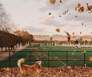 animals, autumn, and cities image