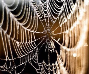 awesome, lights, and spider web image