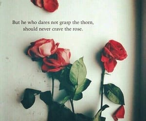 quotes, roses, and rose quote image