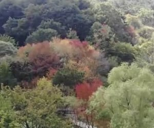 nature, trees, and running man ep422 image