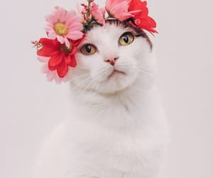 cat, crown, and flower image