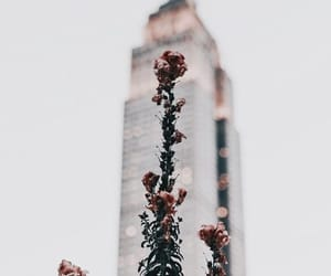 flowers, photography, and building image